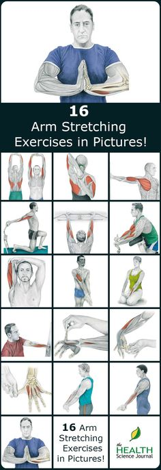 We have a new entry into our stretching series. Today we'll present 16 illustrations of arm stretching exercises showing you exactly which muscle you are exercising. By demonstrating where on your body you should feel the highest tension we hope to help Sport Fitness, Fitness Workouts, Butt Workout, Fitness Motivation, Health Fitness, Week Workout, Cardio Workouts, Exercise Motivation, Fitness Diet