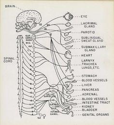 Reeve 74073-3 by medicalmuseum, via Flickr
