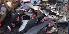 Ban Shark Finning in Singapore