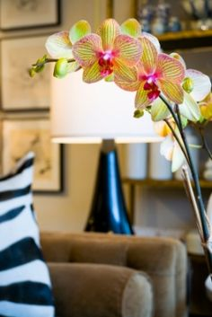 The Do's and Don'ts of Growing Orchids