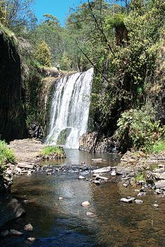 Tasmania - Google Search www.wilmap.com.au350 × 523Search by image The Guide Falls are one of many waterfalls around Tasmania and are easily reached from the Murchison Highway between Burnie and Rosebery at Ridgely. An Alpaca Farm is a little further along