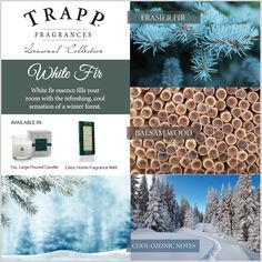 Trapp White Fir - Poured Candle: A bottle of perfume in every candle. All Trapp candles, room sprays, & diffusers are guaranteed to fill a room with fragrance or we will replace it. Trapp Candles, Florida Location, Beach Gifts, Palm Beach, Envy, Photo Wall, Fragrance, Seasons, Instagram