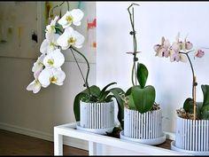 РЕАНИМАЦИЯ орхидеи фаленопсис. Горшки-короны