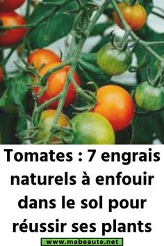 Tomatoes: 7 natural fertilizers to bury in the ground to make plants successful Air Plants, Cactus Plants, Potager Garden, High Pictures, Vegetable Garden Design, Tomato Plants, Flower Planters, Plantar, Wasting Time