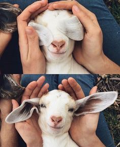 Dad cought me fucking a goat
