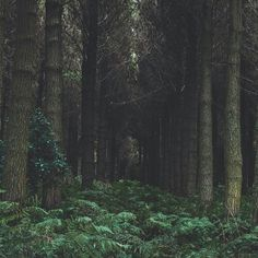 Bosque...