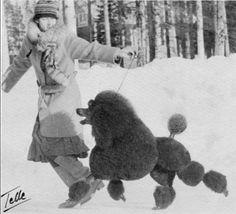 Lady with lively poodle! >Vintage Photo #dogs #pets #StandardPoodles Facebook.com/sodoggonefunny