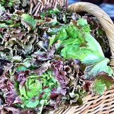 Lettuce at Downtown Phoenix public market today - @ljthornton- #webstagram