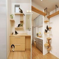 Living with the Litter Box: 12 Solutions for the Cat Lover japanese-cat-house Dream Home Design, My Dream Home, House Design, Dream Homes, Cat Design, Design Ideas, Cat Shelves, Cat Room, Pet Furniture