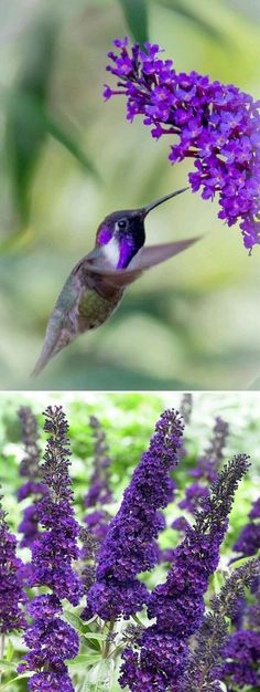 15 Gorgeous Flowers that Will Bring Hummingbirds to Your Garden | Postris
