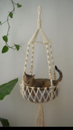 Macrame Plant Hanger Patterns, Macrame Plant Hangers, Macrame Patterns, Diy Cat Hammock, Macrame Hanging Planter, Hanging Plants, Cat Bedroom, Macrame Projects, Diy Projects