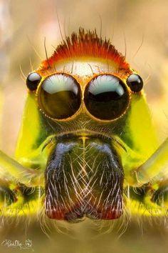 7bcb184025 Spider eyes Spider Face