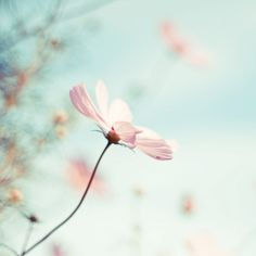 ♥ ♥ . . ★ ❥ #pastels #floral #flowers  #photography by .natasha. #style #inspiration   #charming #spring   #romantic   #dreamy #artistic #enchanting #love #light #feminine  #nature