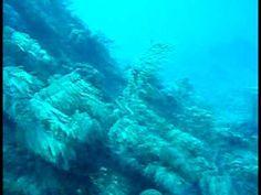 Scuba Dive - French reef - Key Largo, FL - http://www.florida-scubadiving.com/florida-scuba-diving/scuba-dive-french-reef-key-largo-fl/