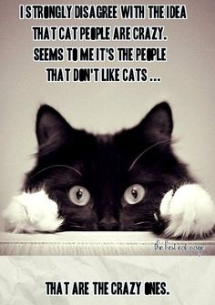 THE BEST CAT PAGE, FACEBOOK…