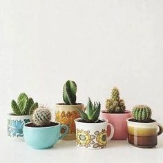 These retro cactus cups!  .  .  Today's theme: Saturday ceramics! We're excited about everything clay, porcelain, ceramic & pots that house plants or show a plant motif. ♡♡  Tag us #planthousecommunity and @plant.house.community to be featured. Sunday is anything goes day.  ♡♡  #indoorplants #succulent #cactus #succulove #interiors #indoorgarden #homedecor #indoorgardening #plantlove #plants #interiordesign #succulove #iloveplants #succulents #plantas    #Regram via @plant.house.community