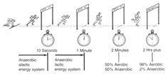aerobic vs anaerobic exercise - Google Search