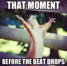 That moment before the beat drops. #epic #squirrel #EDM