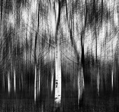 Ansel Adams Photography | ... Fadi Tarawneh > Photos > Abstract > An abstract photo tribute to