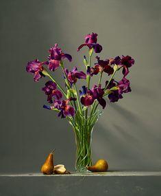 Dario Campanile Iris Viola