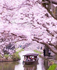 Primavera no Japão...😍😍