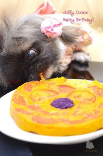 Every year I look forward to celebrating my fur babies birthdays with some self concocted gluten free doggy food. 5th Birthday Cake, Gluten Free Pumpkin, Pekingese, Food Pictures, Fur Babies, Food Photography, Pets, Sweet Tooth, Cookie