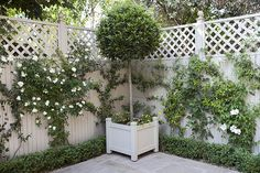 Tiny courtyard garden in Chiswick – in pictures