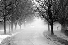Highland Park in fog, Rochester, NY