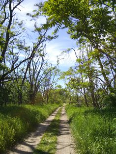 Trails at Kelso Conservation Area - rated - green - easier, less technical trail
