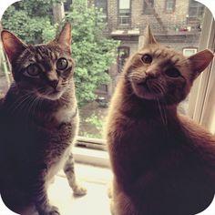 """Tina Marie & Elmer aka """"moo girl"""" and """"Monkey""""  #catlady #iwillnotwisper #brooklyn"""