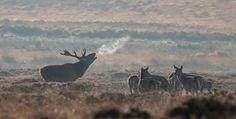 Deer Beef its nowhunting season