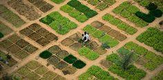 farmlandgrab.org | Agricultores de Malí pelean por sus tierras