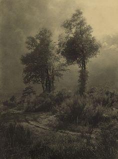Leonard Misonne - Trees in Landscape