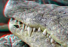 https://flic.kr/p/dZLedK | Jaw Crocodile Blijdorp 3D | Crocodile 3D