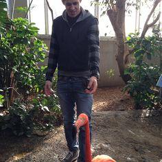 Pittsburgh Penguins: Evgeni Malkin and a flamingo