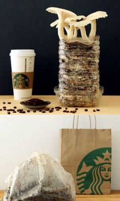 Grow Mushrooms in Coffee Grounds and Cardboard