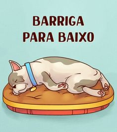 What can your dog's favorite sleeping position tell you about them? Happy Animals, Animals And Pets, Shih Tzu, I Love Dogs, Pugs, Dogs And Puppies, Your Dog, Told You So, Sleep