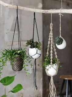 Balkon; Pflanzen an großem Ast aufhängen