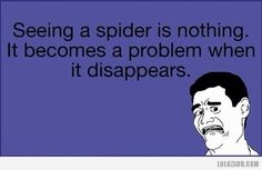 Seeing a spider is nothing