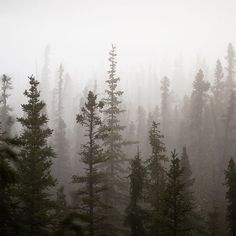 Apocalyptic mornings in the Alaskan wilderness
