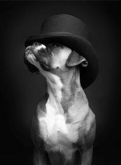 """Top Dog"" by IncaBoxer   Redbubble"