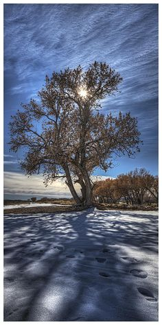 Apache Cottonwood - New Mexico