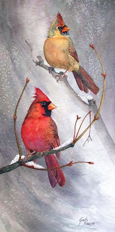 Cardinals Canvas Print featuring the painting Cardinals by Gail Vass Birds Painting, Cardinal Painting, Watercolor Art, Art Painting, Drawings, Painting, Bird Drawings, Canvas Art, Watercolor Bird