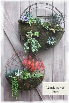 Carenagens de ventiladores velhos viram suporte para suculentas Old fan cover + fine chicken wire mesh + succulents = fabulous succulent wall decor Garden Crafts, Garden Projects, Diy Projects, Succulent Wall Art, Old Fan, Deco Nature, Deco Floral, Garden Planters, Succulent Planters