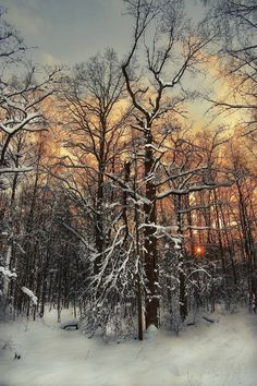 Sunset in Bitsevsky Forest Park, Moscow, Russia