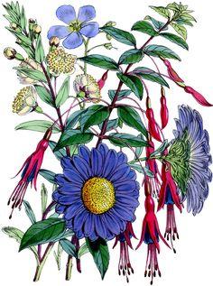 Free-Stock-Image-Botanical-Bouquet-GraphicsFairy.jpg (1337×1800)