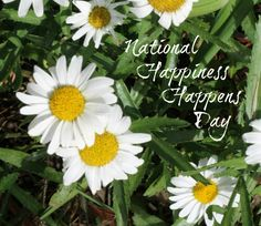 natinal happiness day beautiful flowers white green grass amazing background - Happiness Happens Day Secret Society Of Happy People wallpapers images quotes and best wishes elegance-style.com