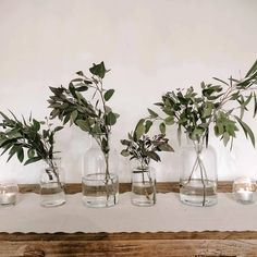 Lovely botanical glass bottle vases for wedding centrepieces & venue styling. Available in 3 sizes - we think they look best if you use both sizes together Use for accent flowers around your wedding venue Use a grouping of these vases as part of your centrepiece, we suggest 3 - 5 per table with flowers to match you Wedding Bottles, Wedding Table Centerpieces, Wedding Signs, Wedding Centerpieces, Centrepieces, Bottle Vase, Glass Bottle, Wedding Colors, Wedding Flowers