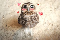 #owl #kawaii #sweet #cute #hearts