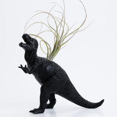 Dinosaur planter with air plant.